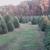 Wagner Christmas Tree Farm