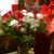The Flower Place Florist & Gifts