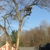 All Seasons Tree Care Inc.