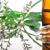 Aggie's Herbs & Vitamines