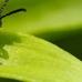 MacNaughton's Pest Control & Wildlife