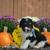 Briar Ridge Puppies