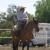 Vaquero School of Horsemanship
