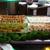C & L Hibachi Grill & Supreme Buffet