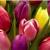 Antoszyk's Garden Center & Florist Shop