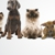 Love 'N' Care Pet Farms