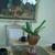 Flowers Arrangement Services by YO