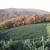 Fraser Ridge Tree Farm
