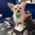 Blue Angel Pet Salon & Boarding