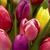 Distinctive Floral Designs LLC