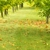 Hilliard's Stump & Tree Removal