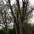 Cougar Creek Tree Service
