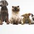 Dog Stylists Inc