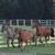 Millhaven Horse Farm Derwood