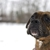 Diligent Dogs, LLC