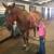 Diamond P Equestrian Center, LLC
