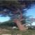 Al and Son's Tree Service