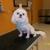 OKC Pet Salon