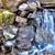Western Carolina Waterscapes