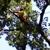 J Bonin Tree Services
