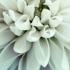 Novelli Floral & Greenhouse