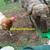 Macopin Farm - Eggs, DDD Provider, Wool/Fiber, Compost, Rare Breeds & more...