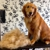 Broadway Pampered Pets Grooming Spa