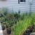 Gardening Adventures-From the Ground Up Nursery