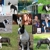 Freedom Dog School & Boarding Kennel - Home of Freedom Boston Terriers