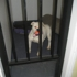 Heavnly Dog Boarding Kennel