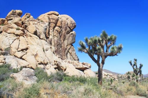 Joshua Tree National Park - Twentynine Palms, CA