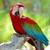 Backos Bird Clinic