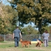 The Pet Hospitals-Lakeland