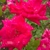 Lendon Floral & Garden