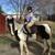HEALING WITH HORSES at WildRose Horse Farm, Inc. 501(c)3