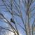 Top Notch Tree