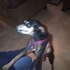 Atlanta Pet Rescue & Adoption