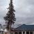 Tri Lakes Tree & Landscape