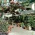 Old Town Garden Inc