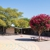 Yew Chung International School of Silicon Valley