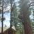 Greater Nevada Tree Service