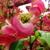 Sakamoto Plants and Landscape Design