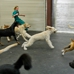 South Tampa Puppy Palace