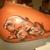 Am-Nice Tattoo & Airbrush Parlor