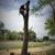 Montgomery Tree Service