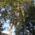 Hoffpauir's Tree Service