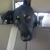 Maricopa County Animal Shelter