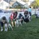 Jump Start Dog Sports