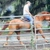 Horse Training and Farrier Services Florida