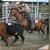 Falcon Ridge Equestrian Center